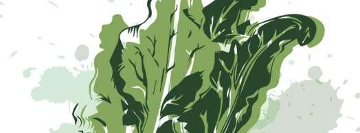 Día de la acelga y la borraja en Cabanillas 2020