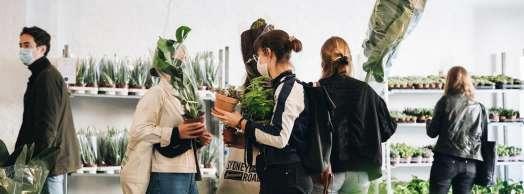 Comprar plantas en Pamplona